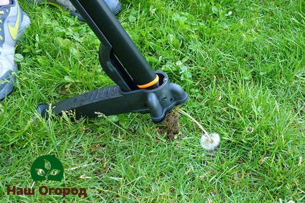 Корнеудалитель - садовый инструмент, приспособленный для удаления корней сорняков, в том числе и одуванчиков