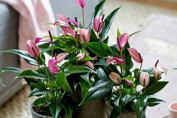 как ухаживать за домашними цветами