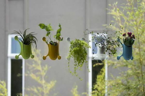 Какие горшки для комнатных растений следует выбирать