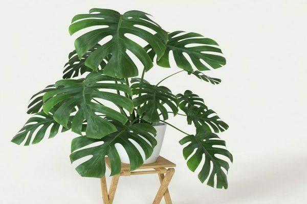домашние растения для занятых людей