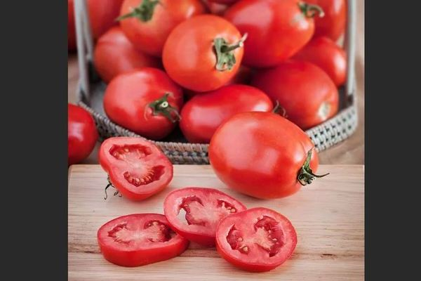 Новичок томат: описание плюсов и минусов сорта