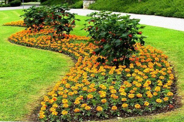 виды ландшафтных цветников