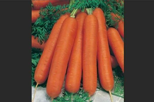 Морковь: описание сортов среднеспелых
