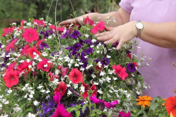 подкормка для петуний для цветения