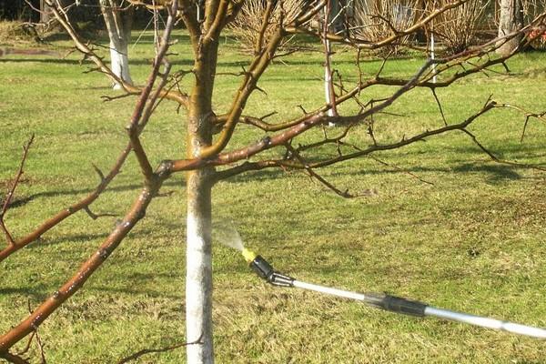 обработка вишни после урожая
