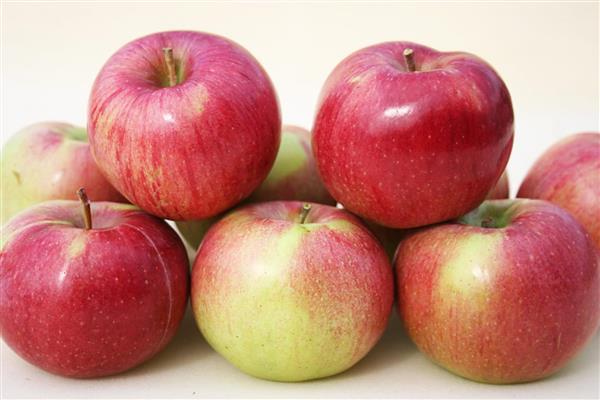Яблоня «Анис Алый» фото